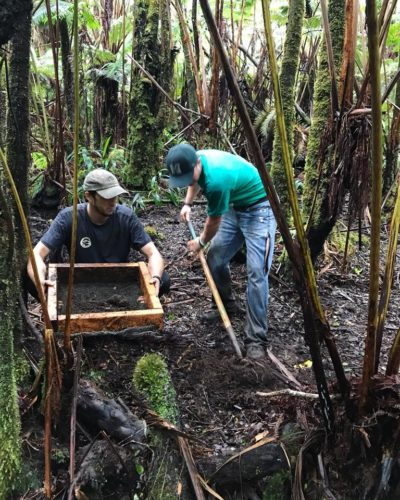 Conducting research on soil macroinvertebrate responses to nonnative feral pigs